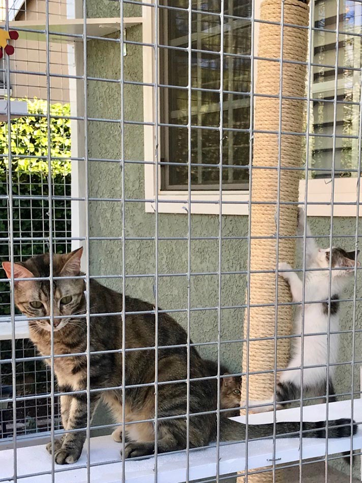 catio11 A Beginner's Guide to the Catio—Cat Patio—Trend
