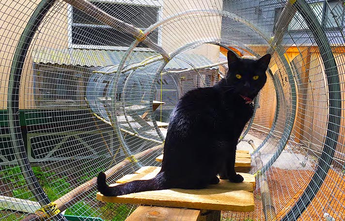 catio18 A Beginner's Guide to the Catio—Cat Patio—Trend