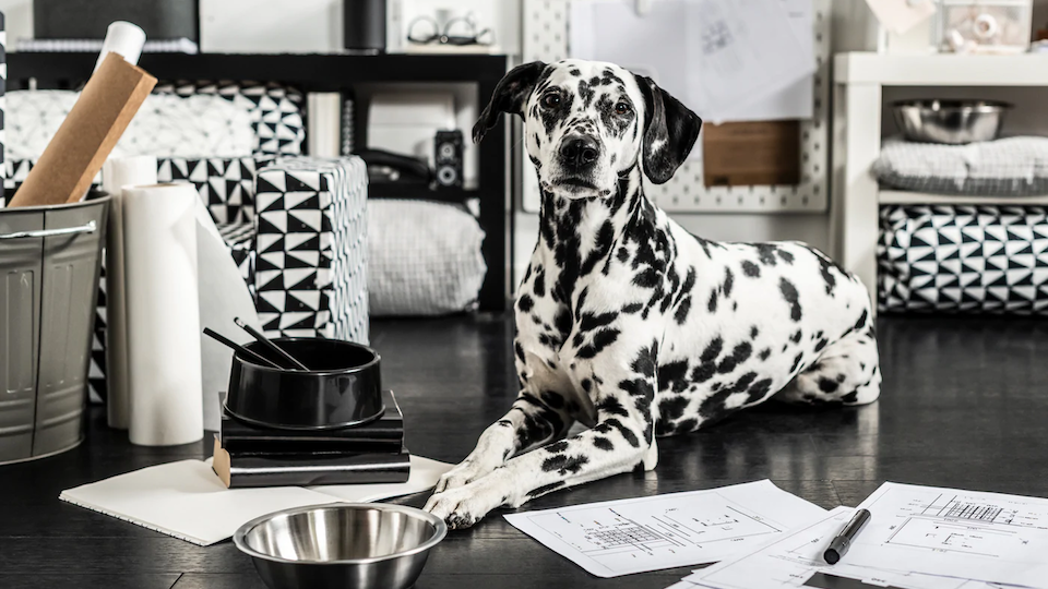 IKEA's New Pet Decor Collection Is Chicer Than You'd Ever Expect—and Super Affordable, Too