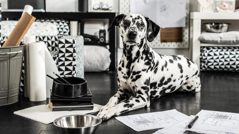 IKEA's New Pet Decor Collection Is Chicer Than You'd Ever Expect—and Super Affordable, Too | StyleCaster