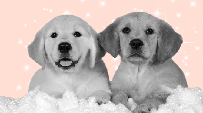 STYLECASTER | Helping Pets During COVID-19 | Puppies