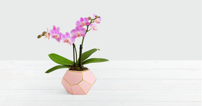 STYLECASTER | Best Flower Delivery Services | FTD pink orchid