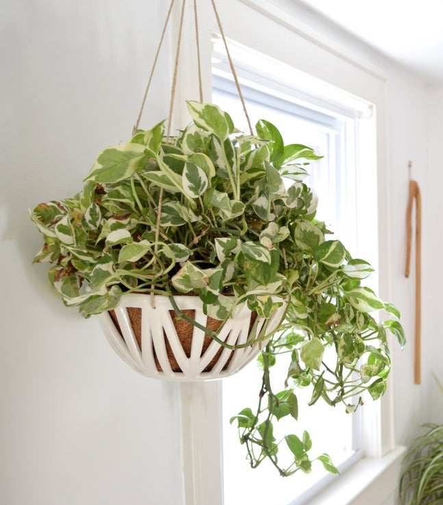 STYLECASTER | spring home decor trends | etsy spring 2020 home decor trends | hanging planter