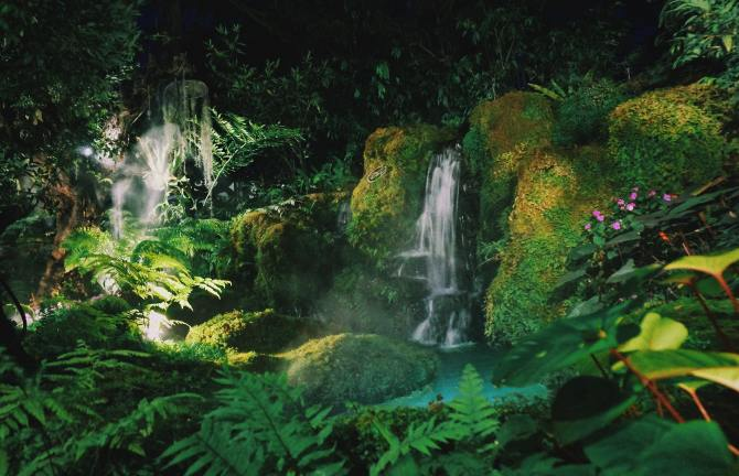 STYLECASTER   Zodiac Signs Zoom Background   rainforest