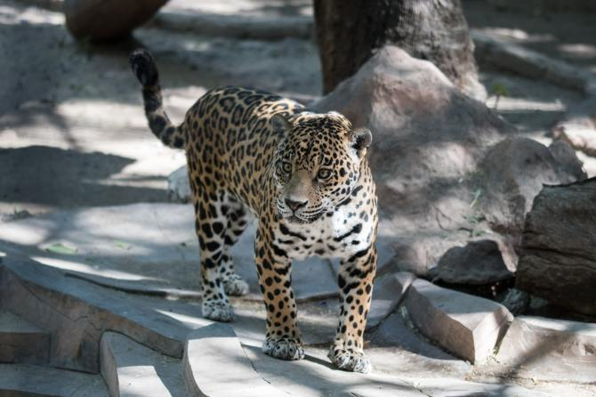 STYLECASTER   how to help animals in captivity