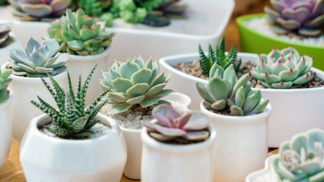 The Best Succulent Plants That You Can Buy on Amazon | StyleCaster