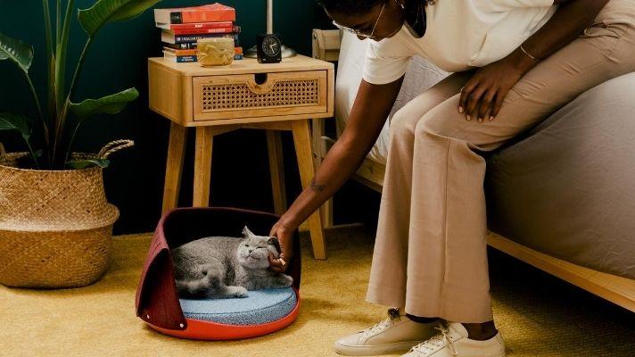 My Quarantine Cat Has Better Home Decor Than I Do