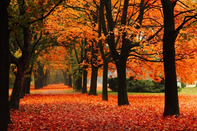 STYLECASTER | Fall Zoom Backgrounds