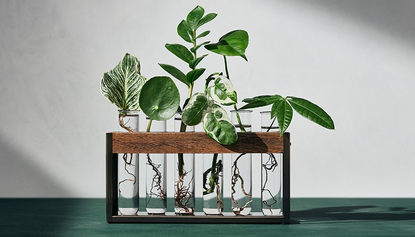 Hilton Carter's New Target Collection Has the Chicest Faux Plants We've Ever Seen