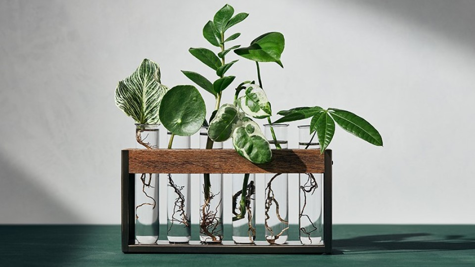 Hilton Carter's New Target Collection Has the Chicest Faux Plants We've Ever Seen | StyleCaster