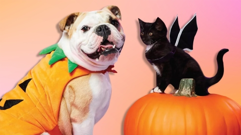 OK, Target Has The *Cutest* Halloween Costumes For Pets | StyleCaster