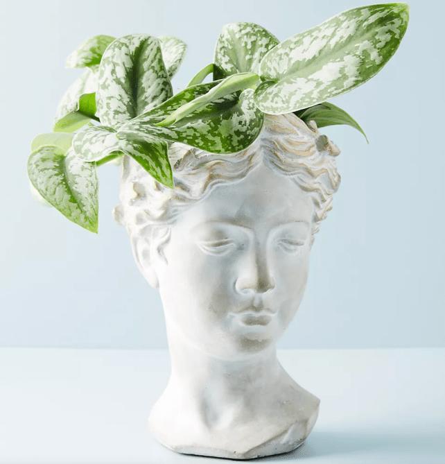 Olla de busto griego
